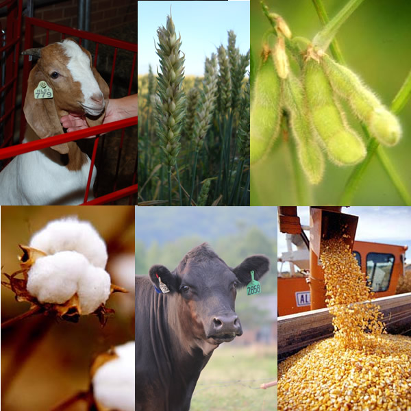 Collage image of crops and livestock - goat, wheat, soybeans, cotton, cow, corn harvesting