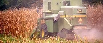 Corn - $383.0 million