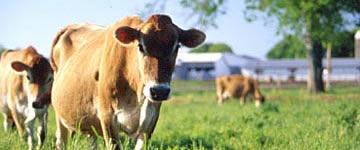 Dairy - $130.0 million