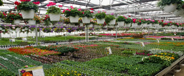 Floriculture, Nursery, and Sod