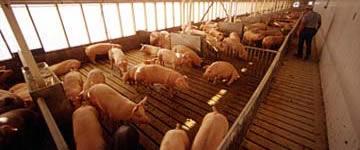 Hogs - $85.0 million